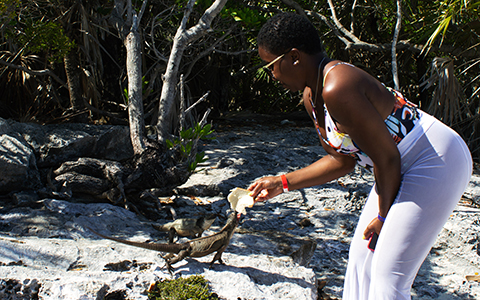 Feed the Rock Iguanas at Allen's Cay